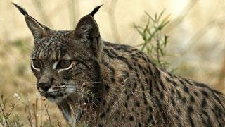 Ver vídeo  'Más de 22.000 especies están amenazadas según la última Lista de la ONU'