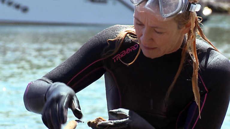 Un país para comérselo - Menorca, un huerto en el mar