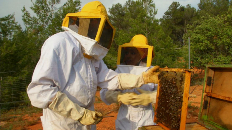 Aquí la tierra - La miel de Requena