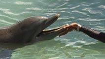 Ir al VideoUn millar de delfines y ballenas quedan encallados cada año