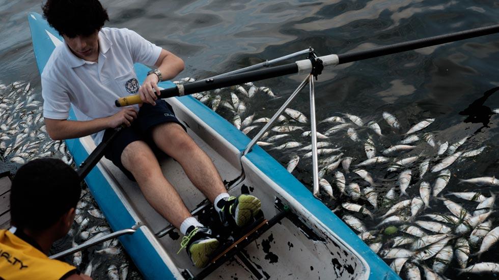 El misterio de los peces muertos ensombrece Río 2016