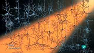 Redes - Modificar el cerebro con luz