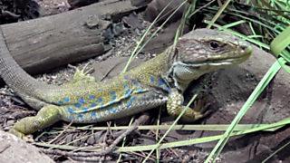 ¡Qué animal! - Parque Nacional de Monfragüe (Extremadura)