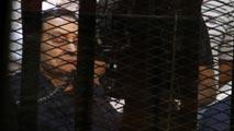 Ir al VideoMubarak declara ante el tribunal que nunca ordenó disparar contra manifestantes
