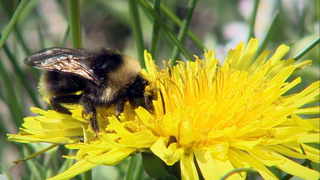 Un mundo sin abejas en 'La Noche Temática'
