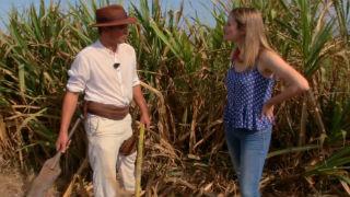 Aquí la tierra  - Lo que no sabías de la caña de azúcar