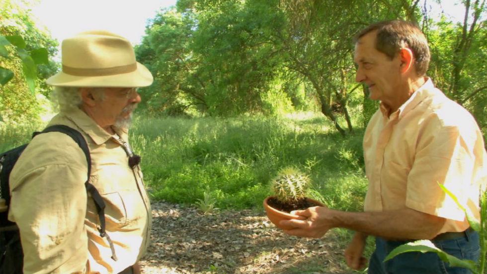 Aquí la tierra - Lo que no sabías sobre los cactus