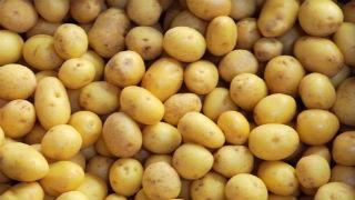 Aquí la tierra - Lo que no sabías sobre las patatas