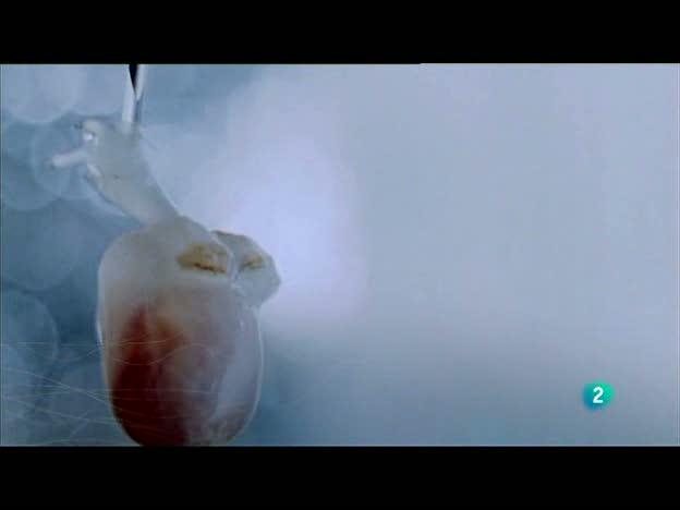 Redes - La nueva cardiología