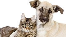 Ir al VideoUna nueva ley prohibirá la exhibición de animales en escaparates