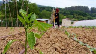 Aquí la tierra - Una nueva vida en el campo