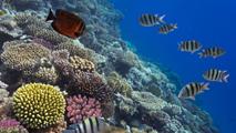 Obama establece en Hawai la reserva marina más grande del mundo