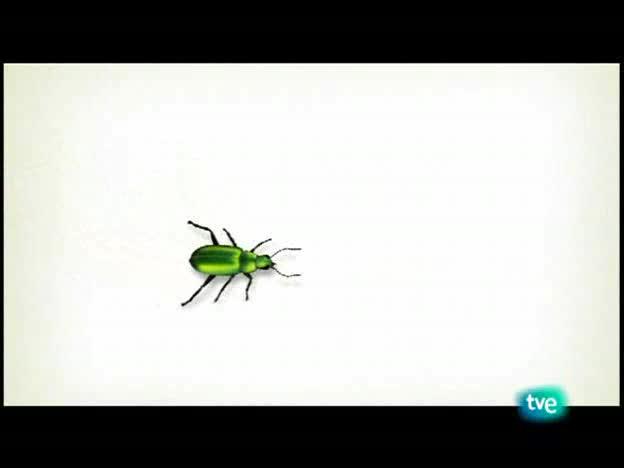 El escarabajo verde - Océanos vacíos