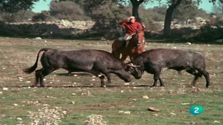El hombre y la Tierra (Fauna ibérica) - Olimpiada zoológica I