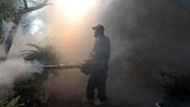 Ir al VideoLa OMS crea una unidad para coordinar todas las acciones contra el zika