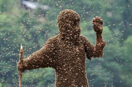 On Off : El hombre abeja