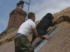 On Off: Con el perro a cuestas