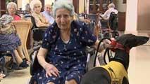 Ir al VideoUna ONG recoge animales abandonados y los entrega a ancianos para su cuidado