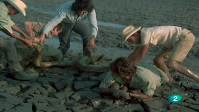 El hombre y la Tierra (Serie venezolana) - Operación Anaconda