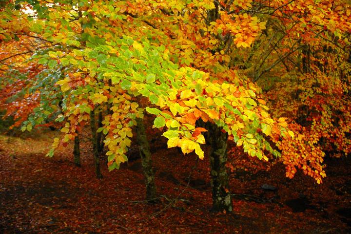 El porqu de la ciencia por qu se caen las hojas en for El arbol que no tiene hojas