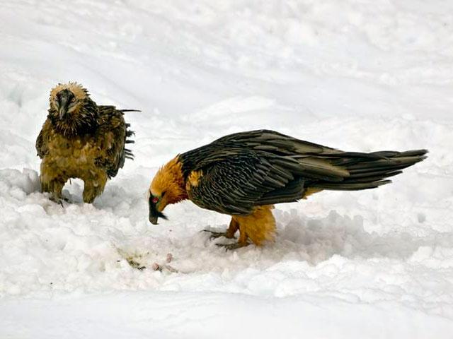 Informe Semanal - El pájaro de barro regresa a los picos