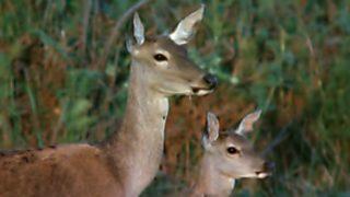 El hombre y la Tierra (Fauna ibérica) - El parque nacional de Doñana 1
