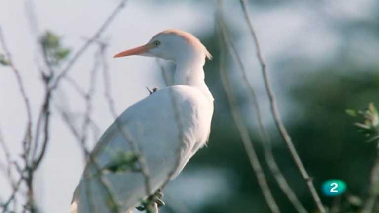 El hombre y la Tierra (Fauna ibérica) - El parque nacional de Doñana 2