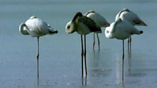 El hombre y la Tierra (Fauna ibérica) - El parque nacional de Doñana 4