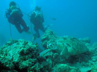 Informe semanal - Jacques Cousteau