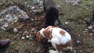 Aquí la Tierra- Perros truferos, un auténtico tesoro