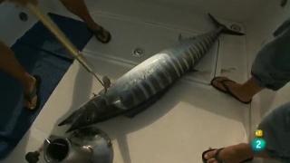 Jara y sedal - De pesca en el aura marina