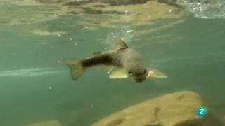 Jara y sedal - La pesca de la trucha en Barbellido