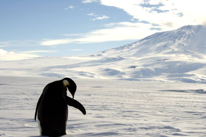Un pingüino emperador de la Antártida