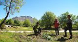 Plantas silvestres comestibles. Parte 2
