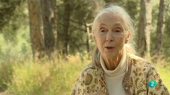Para Todos La 2 - La primatóloga: Jane Goodall
