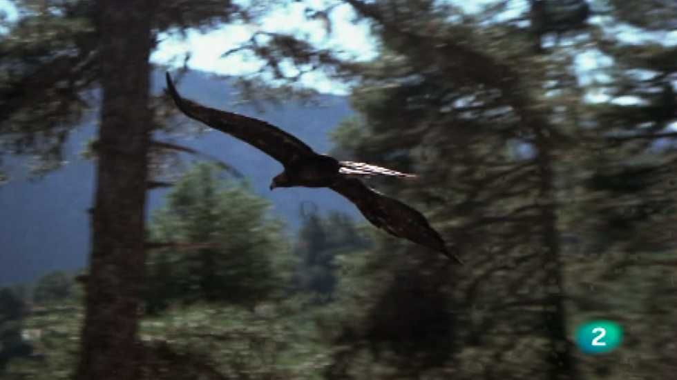 El hombre y la Tierra (Fauna ibérica) - Prisioneros del bosque, 1