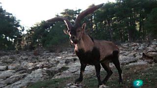 El hombre y la Tierra (Fauna ibérica) - Prisioneros del bosque, 2