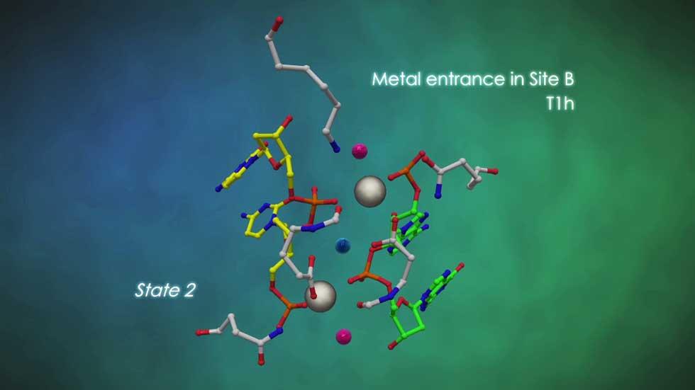 Proceso de rotura de la doble hélice de ADN