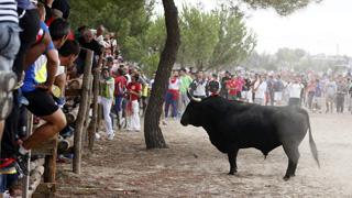 La prohibición de matar en público al Toro de la Vega se convierte en ley