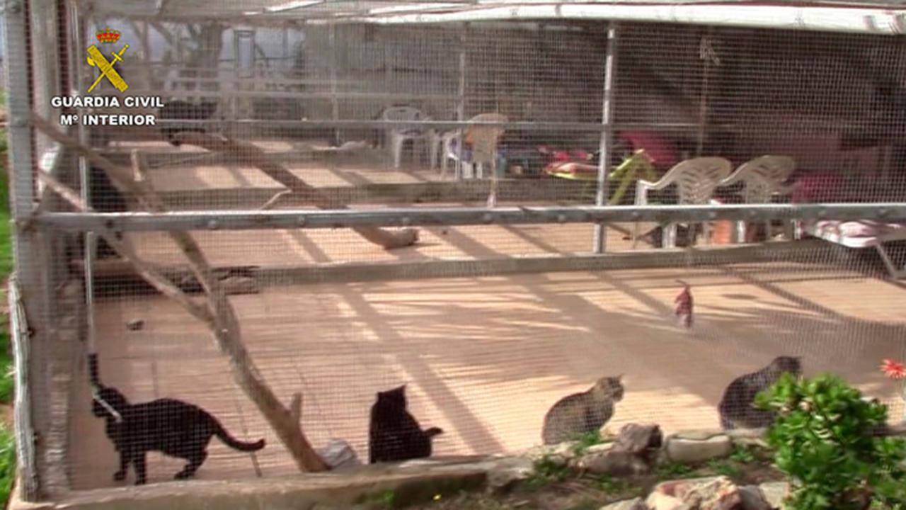 Detienen en m laga a los responsables de una protectora for Protectora de animales malaga ciudad jardin