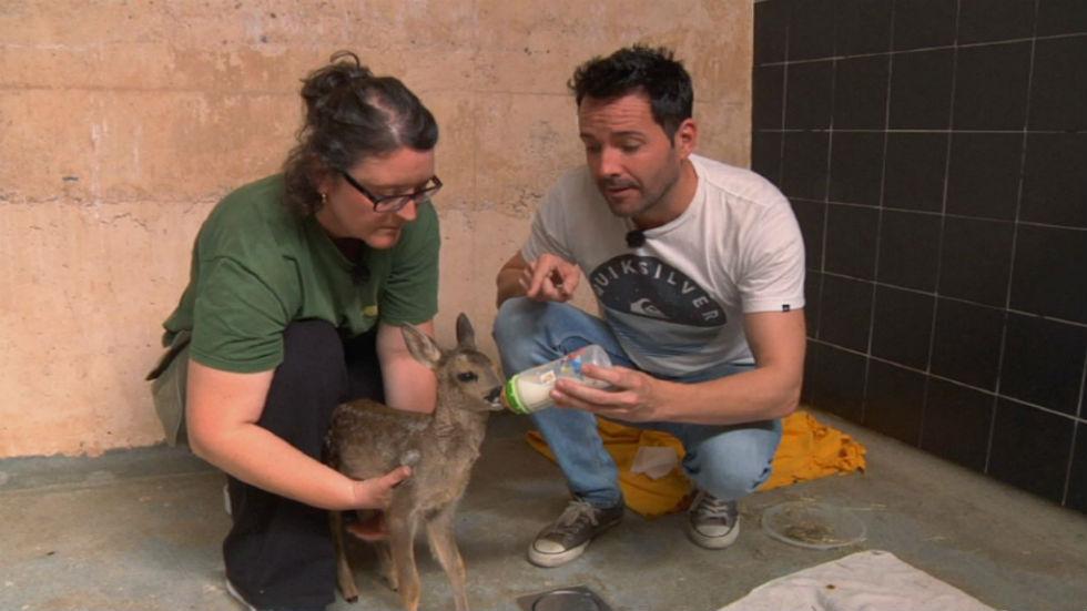 Aquí la tierra - Protegiendo a los animales huérfanos