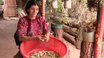 Ir al VideoUn proyecto de desarrollo financiado con donaciones de España ha dado acceso al agua a 800 familias de Guatemala