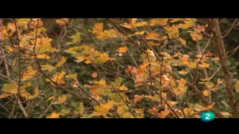 El bosque protector - Puertos Tortosa y Beceite