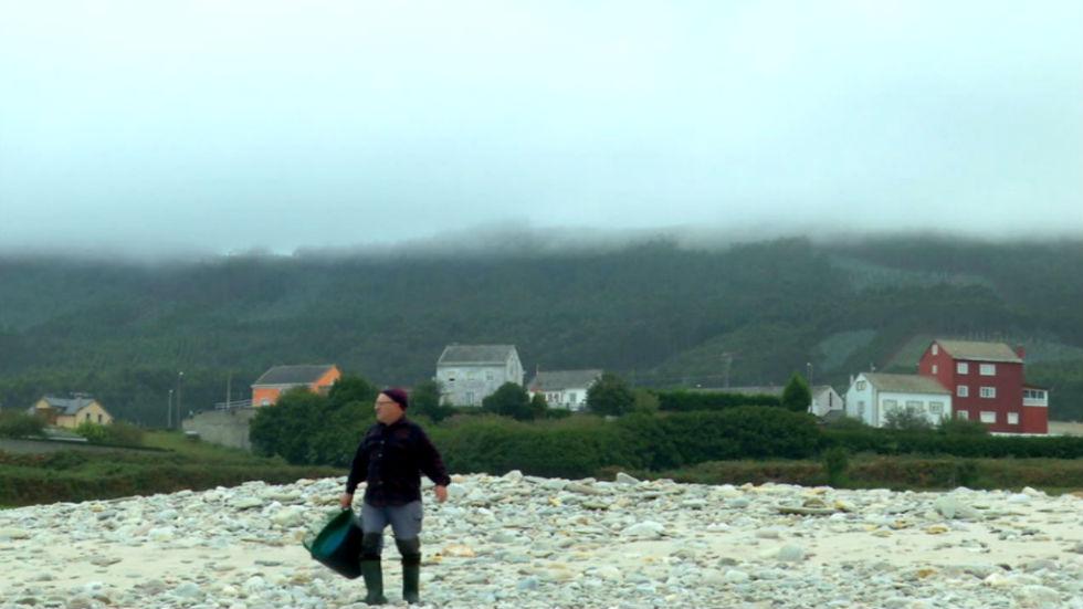 Aquí la tierra - Pulgas de mar