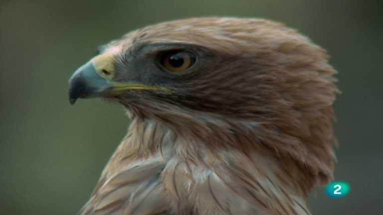 El hombre y la Tierra (Fauna ibérica) - Las rapaces ibéricas diurnas