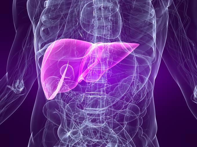 Recreación del hígado en el cuerpo humano, principal órgano al que afecta el daño hepático.