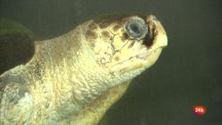 Lab24 - Recuperación de fauna marina y Empresa digital