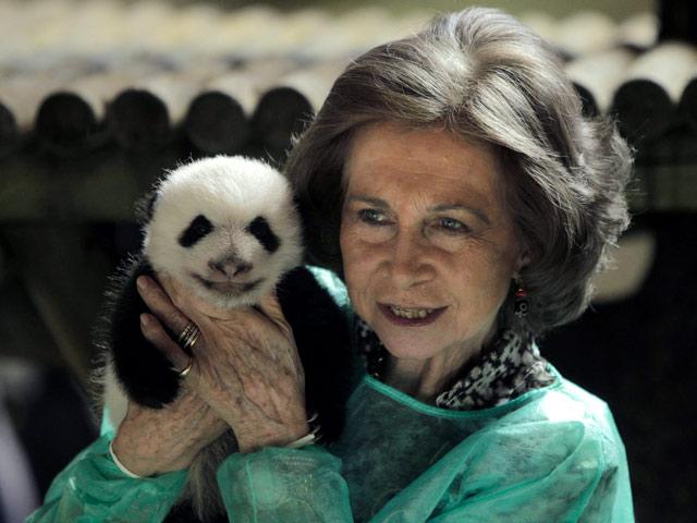 La Reina visita a los pequeños pandas del Zoo de Madrid