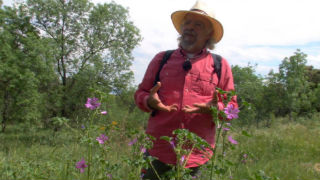 Aquí la tierra - Remedio natural contra las picaduras