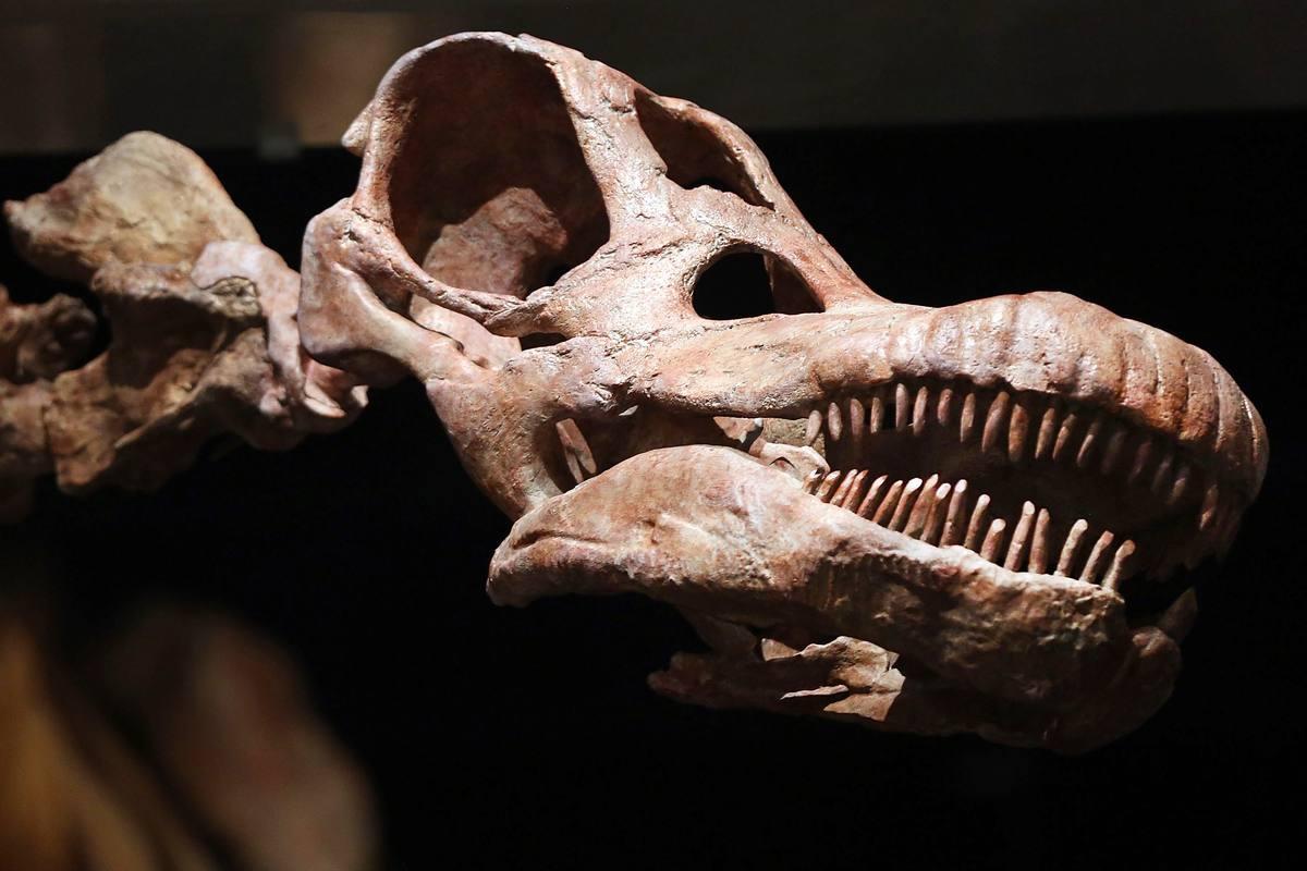 Réplica de la cabeza del gran dinosaurio